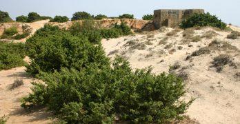 Vegetación en las dunas de la Playa de la Barrosa, Chiclana, Cádiz