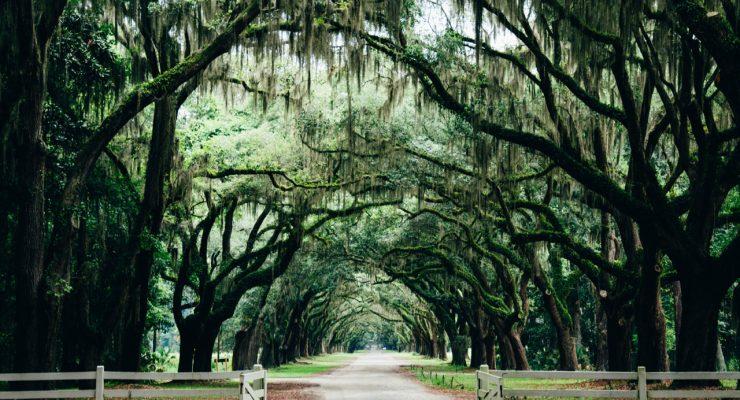 Paisaje de Savannah, Georgia, Estados Unidos