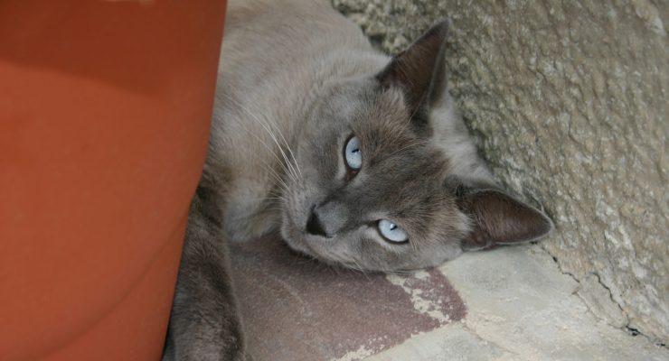 Gato callejero en Garralda, Navarra