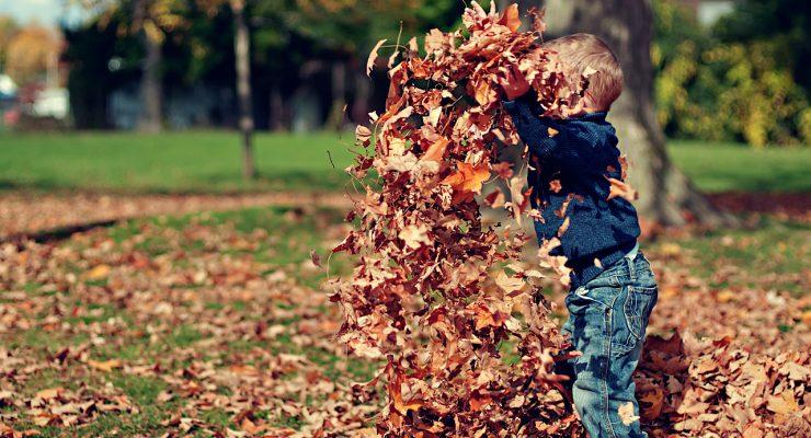 Jugando con hojas
