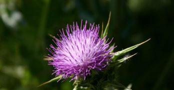 Un Flickr Slideshow de flores