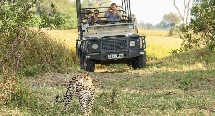 El Tigre, otra vez de Safari, con un iPod Touch