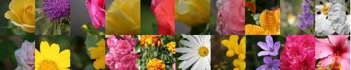 Imágenes de flores del plugin Ravatar