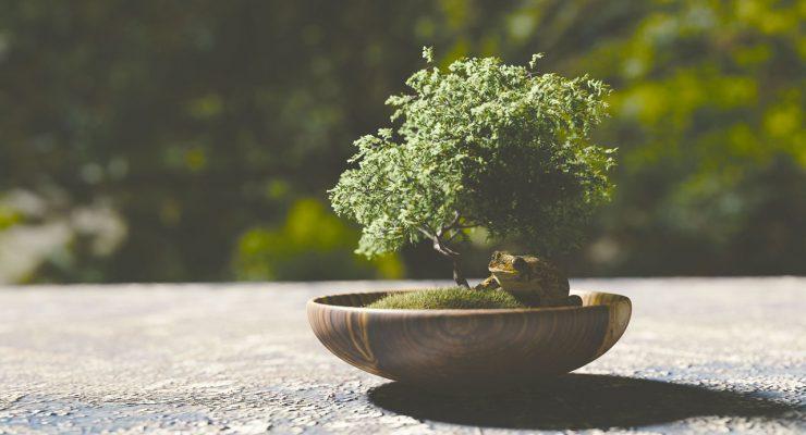 De las virtudes de Bonsai, la lectura y algunas otras cosas
