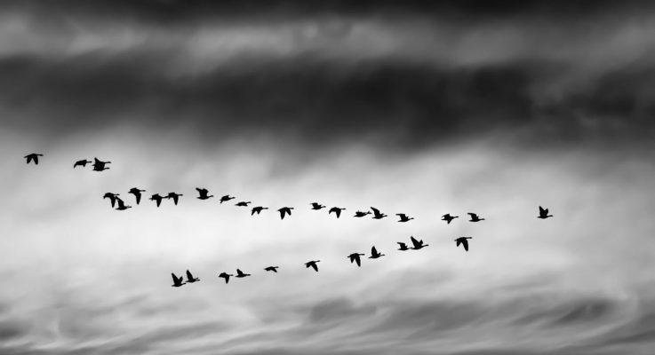 Un truco para resolver problemas derivados de la migración del blog
