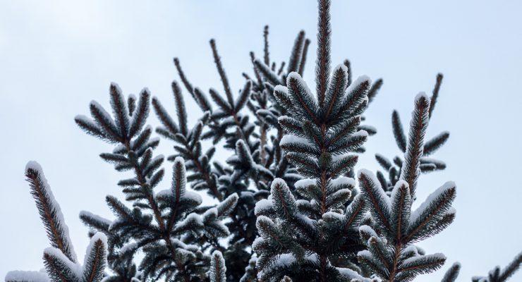 Árbol de Navidad con nieve