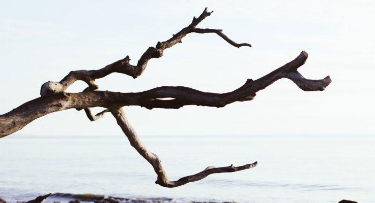 El árbol de índices del Tigre