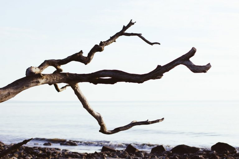 Ramas de un árbol