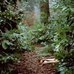 El interior del bosque, de Eugenio Fuentes