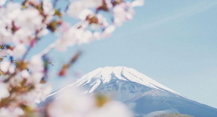 Cerezo japonés y, al fondo, el Monte Fuji
