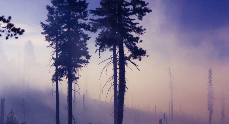 Árboles quemados