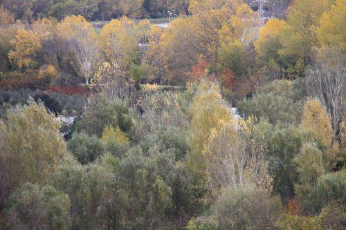 Los sotos del río Arga 1
