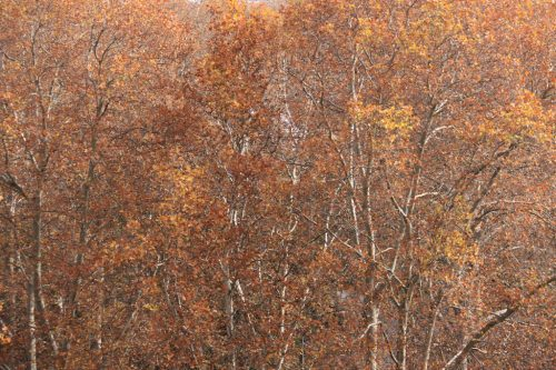 Colores del otoño desde el Baluarte del Redín 1