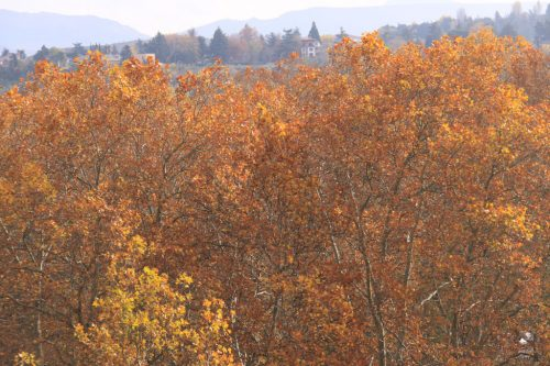 Colores del otoño desde el Baluarte del Redín 3