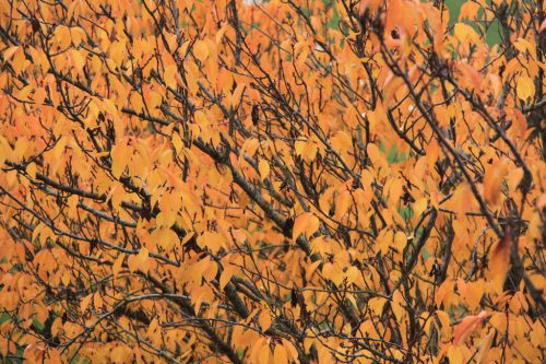 Colores del otoño en la Taconera 1