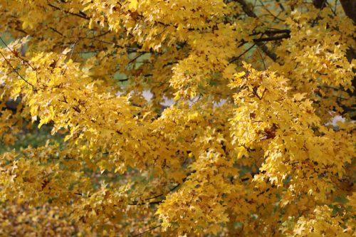 Colores del otoño en la Taconera 2