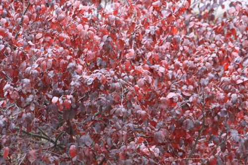 Colores del otoño en la Taconera 3