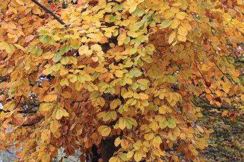 Colores del otoño en la Taconera 5