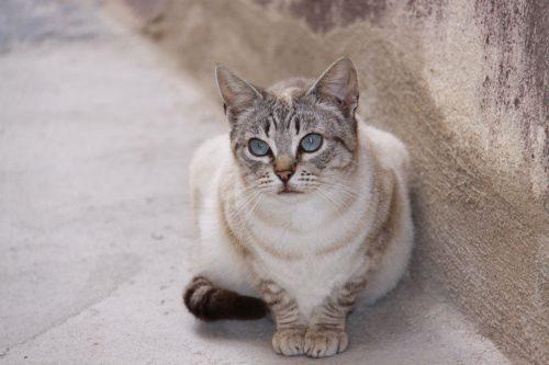 Gato turiasonense 2