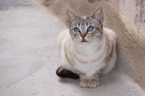 Gato turiasonense 3