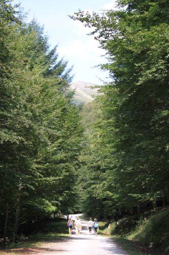 También hay caminos soleados en la selva del Irati