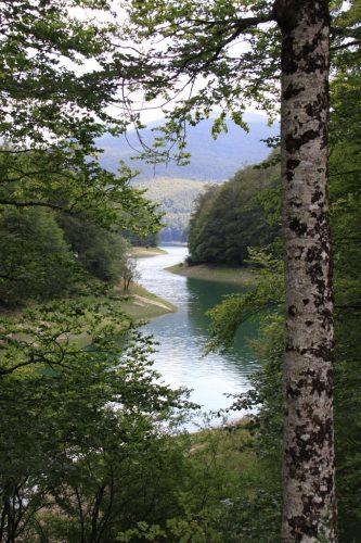 El río, ya embalsado, serpentea entre los árboles