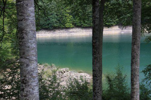 Troncos grises y agua esmeralda
