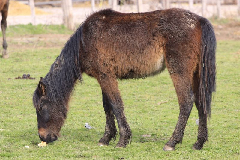Un caballo comiendo un currusco de pan
