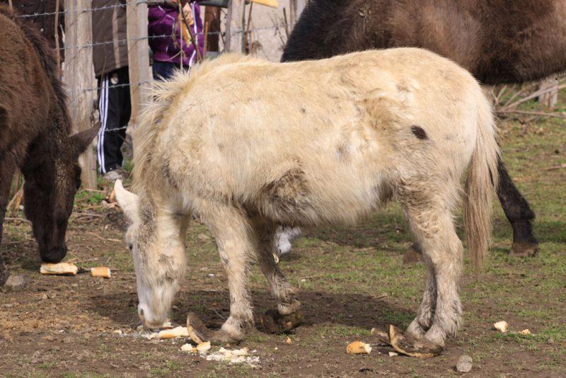 ¿Un caballo con zuecos?