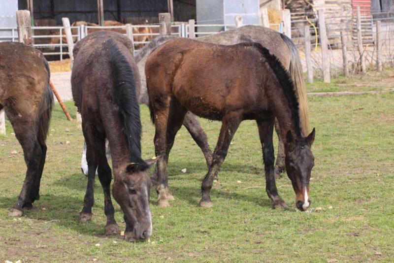 Más caballos golosos de pan