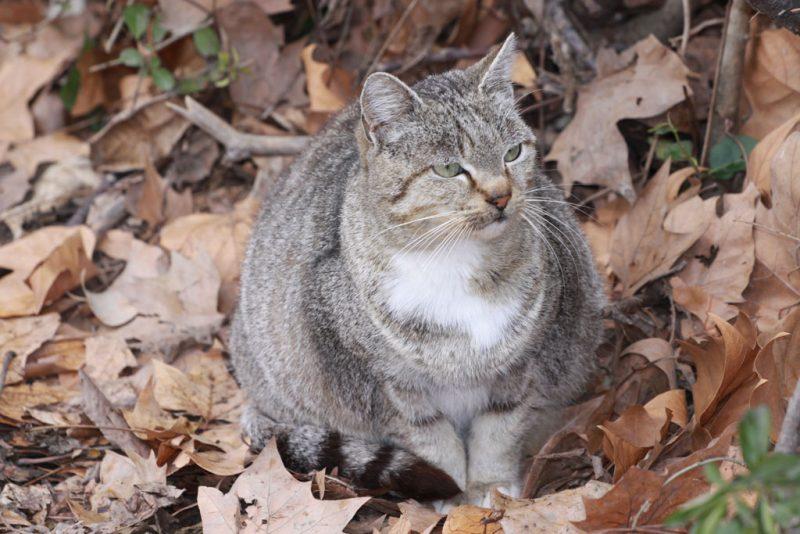 Una gata preñada, en la Vuelta de Aranzadi