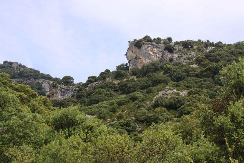 Vegetación y roquedos en el cañón del Río Ubagua 1