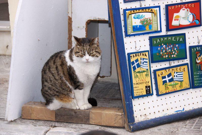 Gato y anuncios turísticos, en el barrio de Plaka