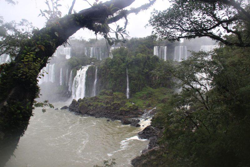 La selva y las cascadas 1