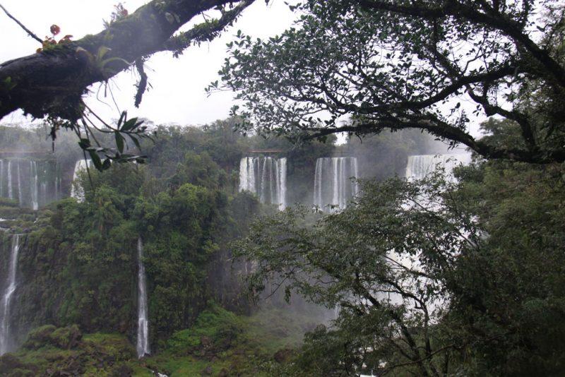 La selva y las cascadas 2