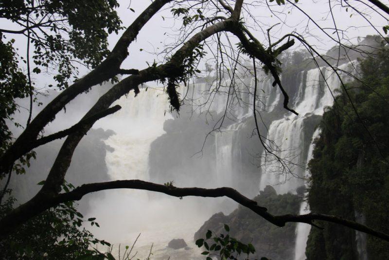 La selva y las cascadas 4