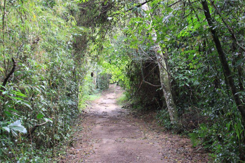 Comienzo del recorrido por el sendero Macuco