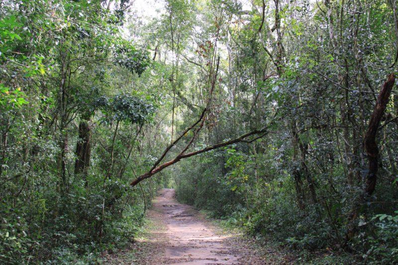 La vegetación de la selva rodea el sendero Macuco